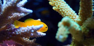 Czy warto inwestować w akwarium na wymiar